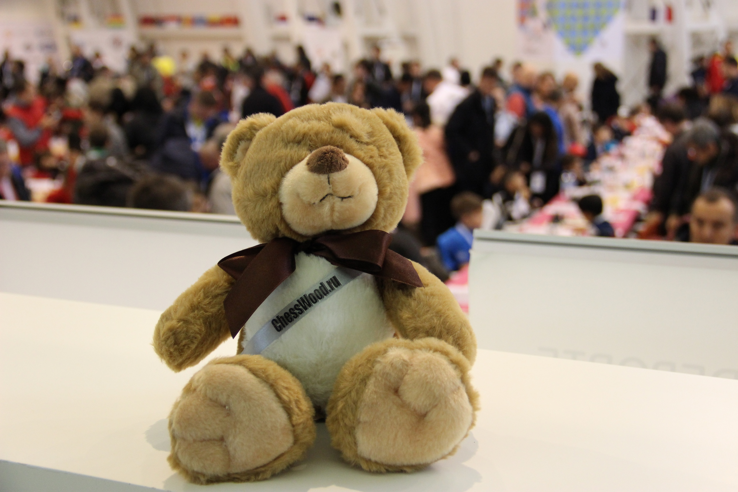 Медведь на шахматном турнире